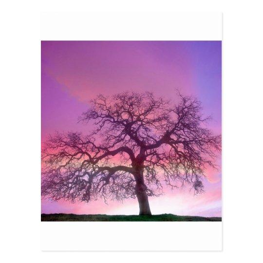 Nature Trees Winter Purple Postcard