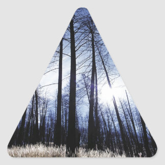 Nature Trees Winter Sunny Morning Triangle Sticker