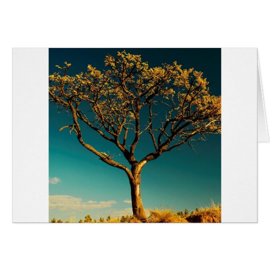 Nature Trees Yellow Bark Card
