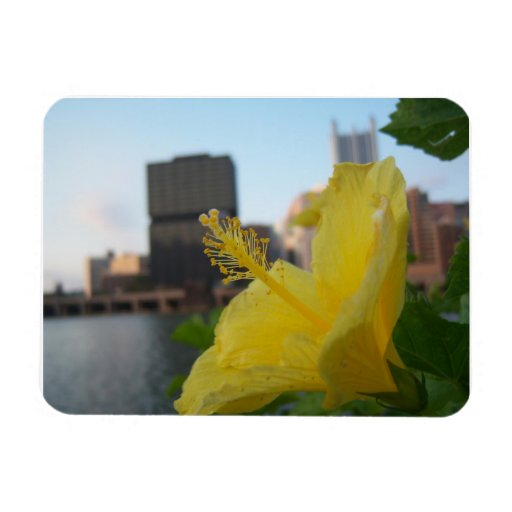 Nature trumps city rectangular photo magnet
