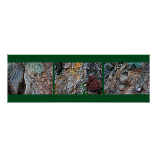 Nature Up Close, Triptych I Poster