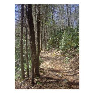 Nature Walk Postcard
