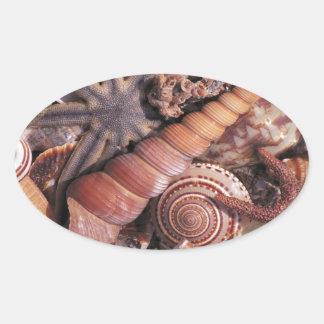 Nature Water Assorted Shells Beach Oval Sticker
