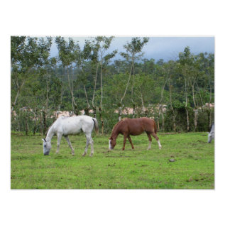 Nature - We Look For Peace Poster at Zazzle