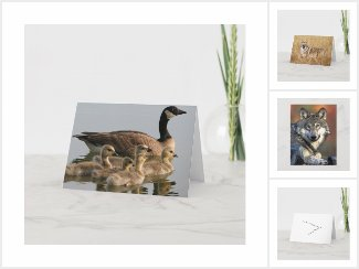 Nature - Wildlife Cards