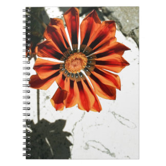 Nature Wins Notebooks