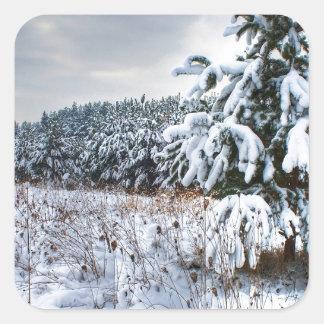 Nature Winter New Plantation Square Sticker
