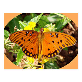 Natures Angels the Butterfly Postcard