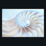 "Nature&#39;s Art 2 Photo Print<br><div class=""desc"">This beautiful Nautilus photograph is sure to add beauty and a sense of wonder to any room!</div>"