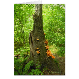 Nature's Art: Beartown State Forest- Quote inside Card