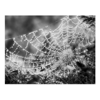 Nature's Artist - The Spider's Web - Photograph Postcard