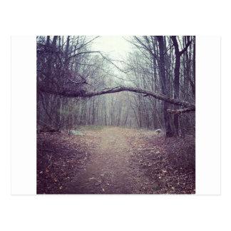 Natures Awning Postcard