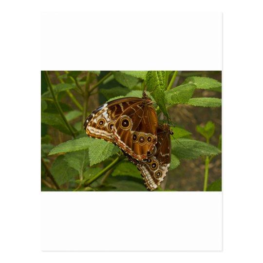 Natures Beauty 2 Postcard
