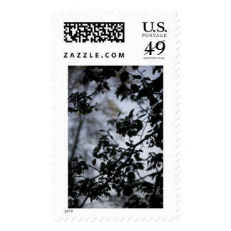 Nature's Beauty Postage Stamp Series 3 of 6