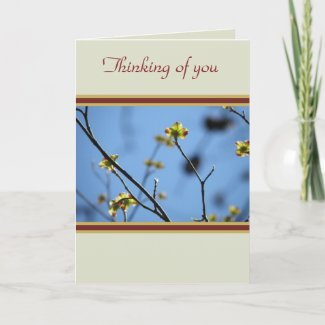 Natures Beauty Tree Blossom Thinking of you card