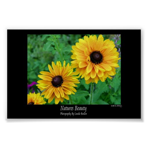 Natures Beauty-Yellow Stars in the Garden Poster