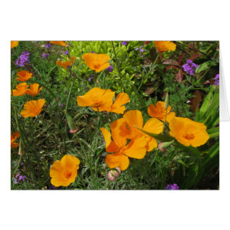 Natures Canvas-Poppies Card