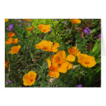 Natures Canvas-Poppies Cards