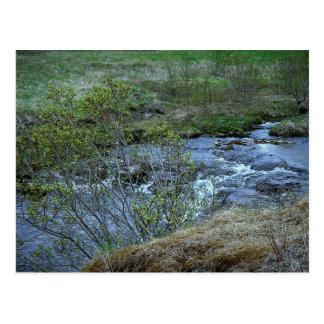 Nature's Canvas postcard