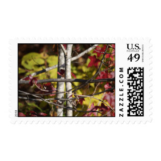 Nature's Cross postage