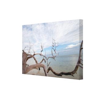 natures drift wood canvas print