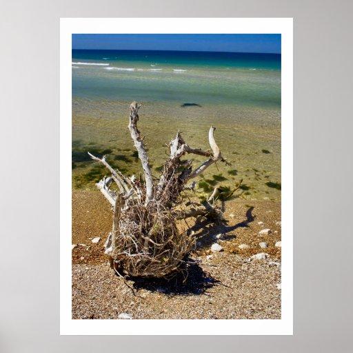 Nature's Elements - Driftwood Beach Poster