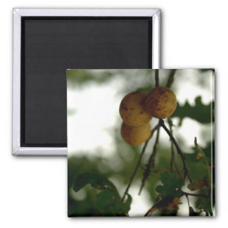 Natures Fruit 2 Inch Square Magnet
