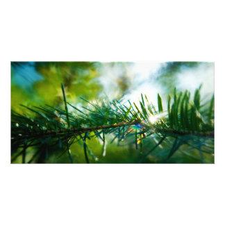 Nature's Magic Custom Photo Card