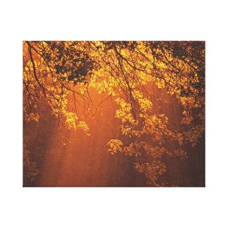 Nature's Morning Sun Rays Canvas Print