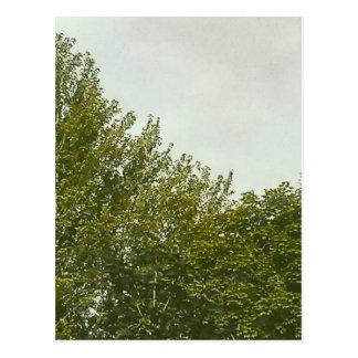 Natures Painting Postcard