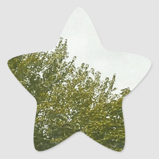 Natures Painting Star Sticker