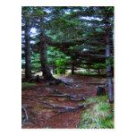 Nature's Stairway Postcard