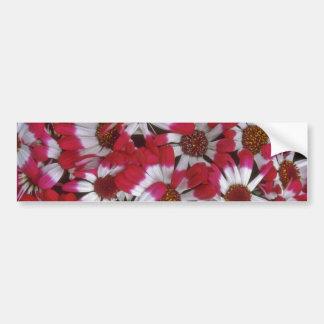Nature'S Tricolor Bumper Stickers