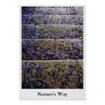Nature's Way Posters