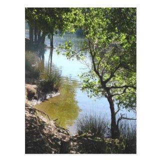 Nature's Window III Postcard