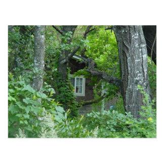 Nature's Window Postcard