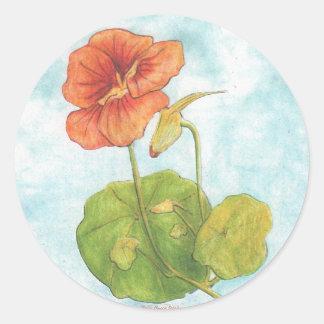 Naturtium  Art  Sticker /  Sally Coupe Jacobson