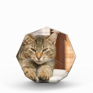 Naughty Cat Acrylic Award