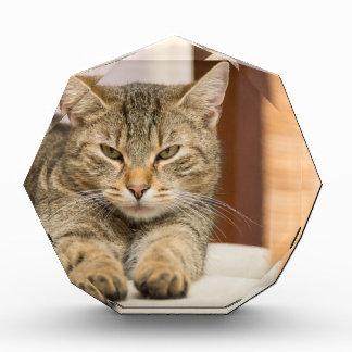 Naughty Cat Award