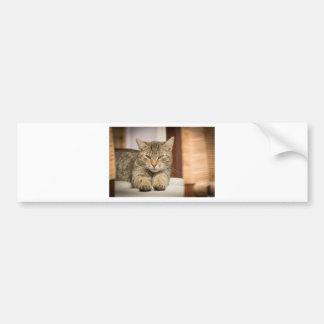 Naughty Cat Bumper Sticker