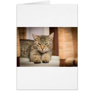 Naughty Cat Card