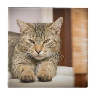 Naughty Cat Ceramic Tile