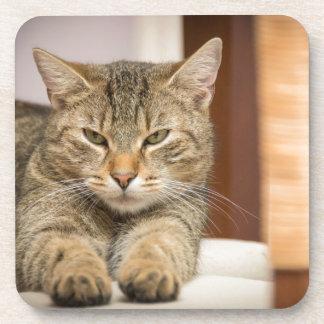 Naughty Cat Coaster
