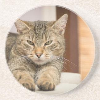Naughty Cat Drink Coaster