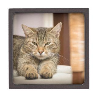 Naughty Cat Jewelry Box