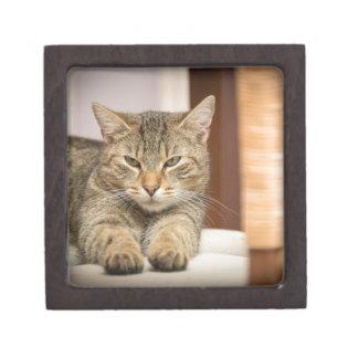 Naughty Cat Keepsake Box