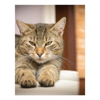 Naughty Cat Letterhead