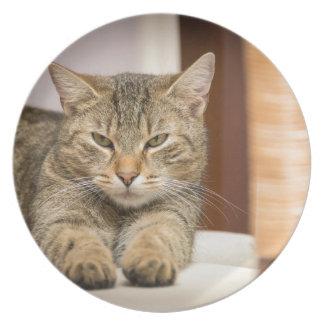 Naughty Cat Melamine Plate