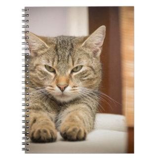 Naughty Cat Notebook