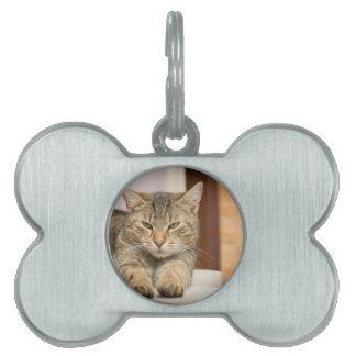Naughty Cat Pet Tag